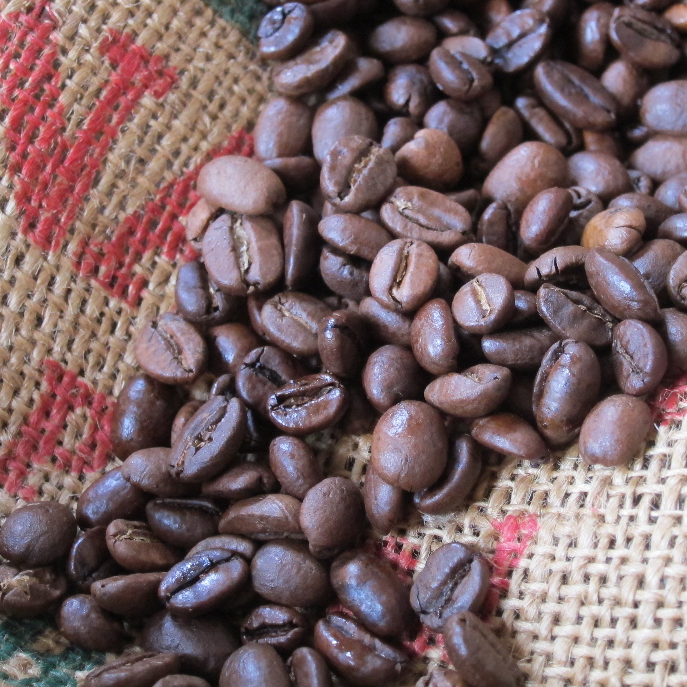 Wholesale Bean Coffee